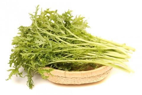水菜(京菜)