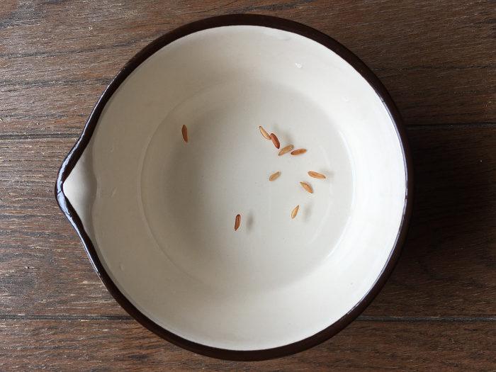 パキポディウム グラキリスの種子