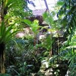 板橋区立 熱帯環境植物館のイベント