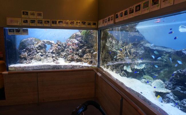板橋熱帯植物館