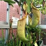 食虫植物温室