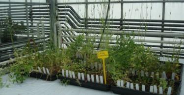 火星の土を模した用土で栽培される野菜