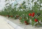 大林組 太陽型植物工場
