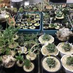 サボテンと多肉植物の即売会