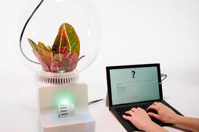 プロジェクトフローレンス 植物との対話