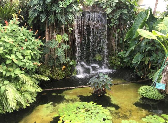 木生シダと水辺の景観