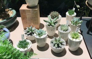陶器鉢と化粧石で仕立てられた多肉植物