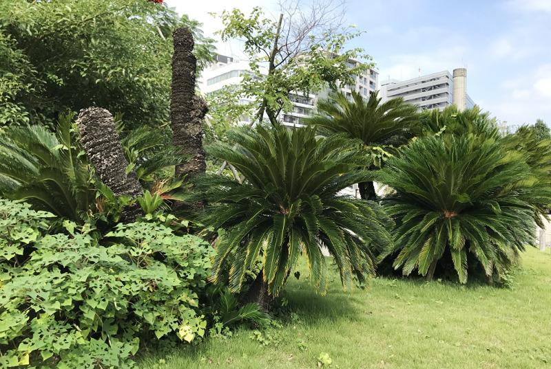 新宿御苑 温室前