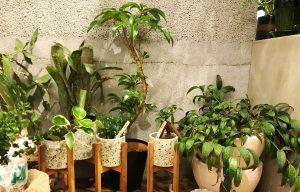 鉢物 観葉植物
