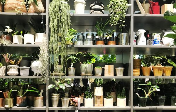 様々なデザイン・材質の鉢、ポットが並ぶ棚