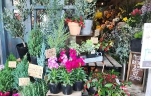 店頭の季節の花苗、観葉植物、オリーブ ベオーネ 用賀駅