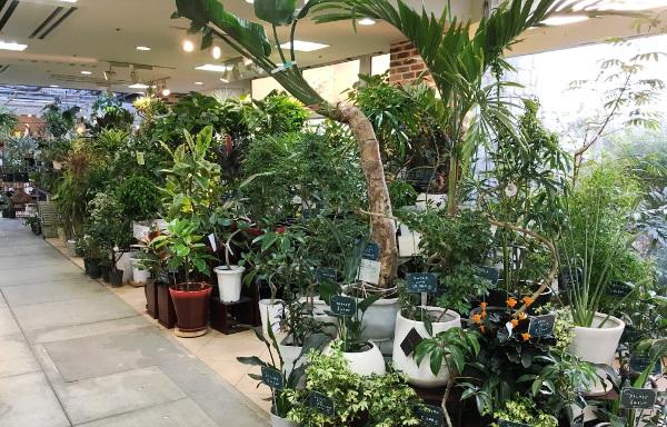 店内 観葉植物 プロトリーフ ガーデンアイランド玉川店