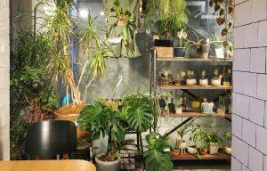 大鉢の観葉植物にモンステラ、ビカクシダ、多肉植物などインテリア性の高い植物が多く揃うunico 二子玉川店