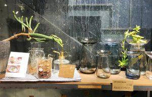 球根の水栽培用容器 unico 二子玉川
