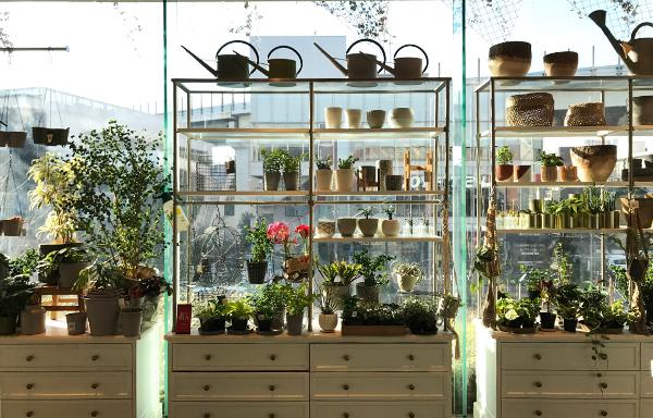 インテリアショップながら植物・鉢・用土など充実の品揃え