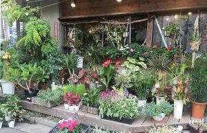 観葉植物、季節の花苗、食虫植物など雑多な品揃えながら見やすく配置されています