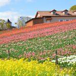 堺・緑のミュージアム ハーベストの丘のイベント
