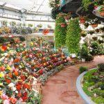 花と泉の公園のイベント