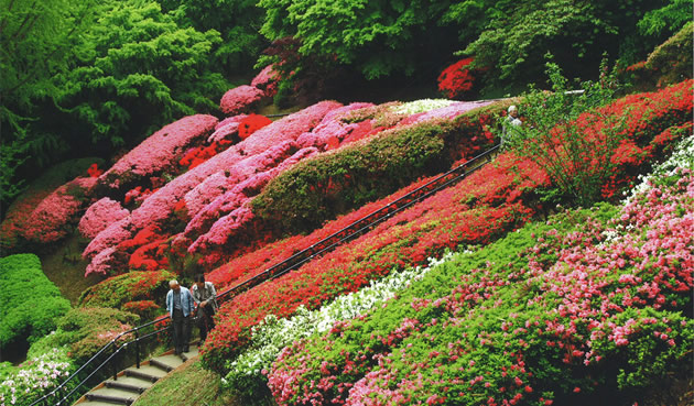 北九州市立白野江植物公園のイベント