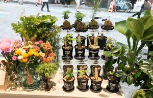 苔玉、観葉植物、生花