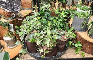 観葉植物、多肉植物