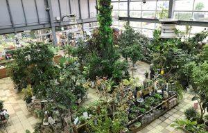 室内インドアプランツ 観葉植物、多肉植物、季節の花鉢