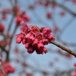 釣り鐘状の花