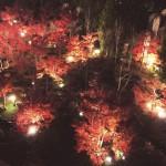紅葉ライトアップ ~池に映るもみじの水鏡~