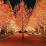神戸市立森林植物園 紅葉のライトアップ