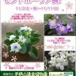 秋のセントポーリア展 姫路市立手柄山温室植物園