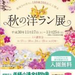 秋の洋ラン展 | 2018年11月 | 姫路市立手柄山温室植物園