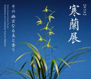 第14回 寒蘭展 ~その幽玄なる美と香り~
