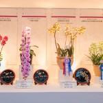 沖縄国際洋蘭博覧会2019