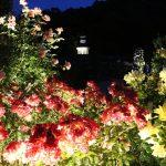 ナイトバガテル 夜のバガテル公園
