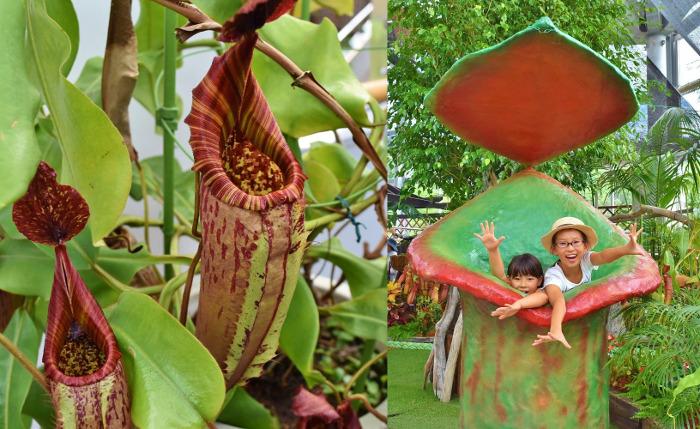 夏の企画展示「虫を食べる技を持つ 食虫植物展」