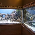地下1階 ミニ水族館