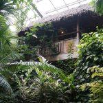 板橋区立 熱帯環境植物館