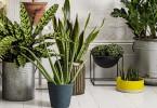 空気清浄効果のある植物