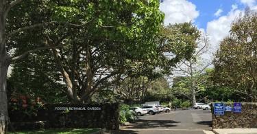 ハワイの植物園 フォスターボタニカルガーデン