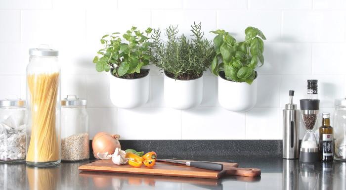 Eden Suction Planter