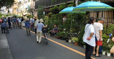 浅間神社 お富士さんの植木市