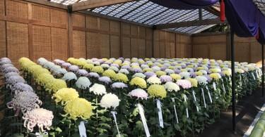皇室ゆかりの新宿御苑菊花壇展