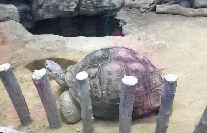 両生爬虫類館 ゾウガメ