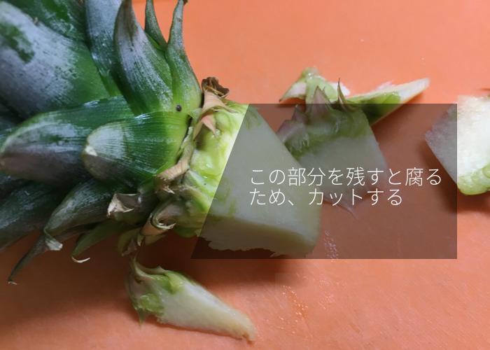 パイナップルの再生栽培 水栽培を始める下準備