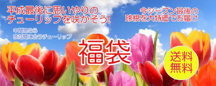 富山県花卉球根農業協同組合 福袋