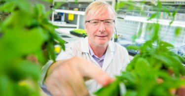 植物とのスキンシップはNG!接触は植物の成長を遅らせる