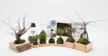 BEAMS × 苔!人気セレクトショップが伝える苔の魅力