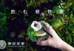 飲む植物園×東京茶寮