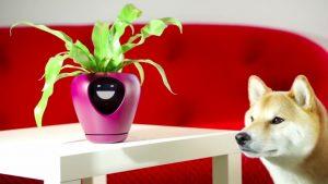 植物の気持ちがわかる?プランター「Lua」