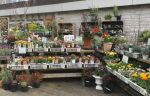 店頭にはハーブや季節の花苗が並びます